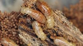 Termites Wallpaper High Definition