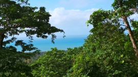 Treetops Photo Download