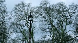 Treetops Photo Free