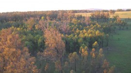 Treetops Pics