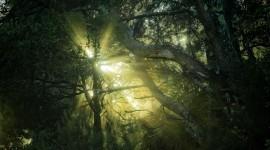 Treetops Wallpaper 1080p