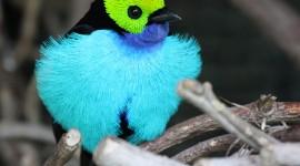 Unusual Birds Desktop Wallpaper HD