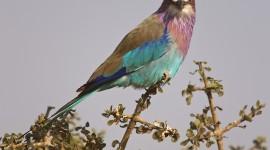 Unusual Birds Image