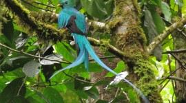 Unusual Birds Photo