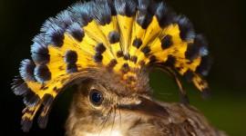 Unusual Birds Photo Free