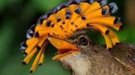 Unusual Birds Wallpaper