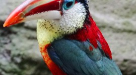 Unusual Birds Wallpaper For Android