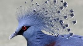 Unusual Birds Wallpaper For Desktop