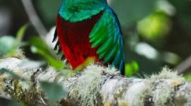 Unusual Birds Wallpaper For IPhone