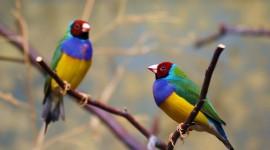 Unusual Birds Wallpaper Free