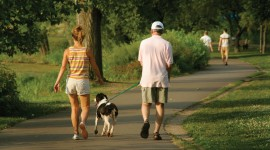 Walk With A Dog Wallpaper