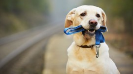 Walk With A Dog Wallpaper Download