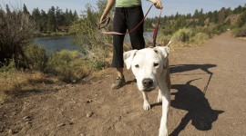 Walk With A Dog Wallpaper Free