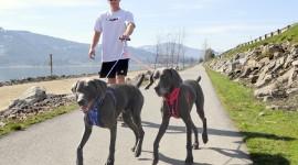 Walk With A Dog Wallpaper Full HD