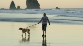 Walk With A Dog Wallpaper Gallery
