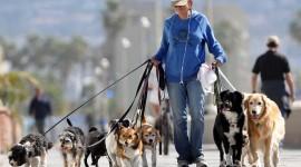 Walk With A Dog Wallpaper HD