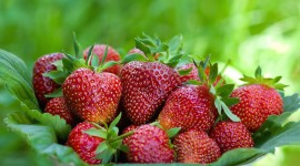 4K A Basket Of Strawberries Pics#1
