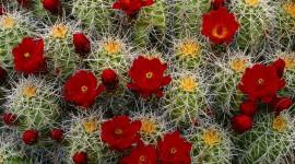 4K Cacti Wallpaper 1080p