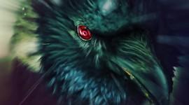 4K Crows Desktop Wallpaper