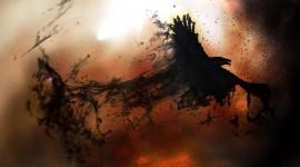 4K Crows Desktop Wallpaper HD