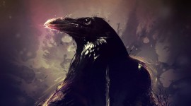 4K Crows Image Download