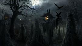 4K Crows Wallpaper 1080p