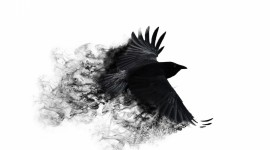 4K Crows Wallpaper Free