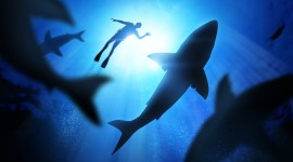 4K Divers Wallpaper Download Free