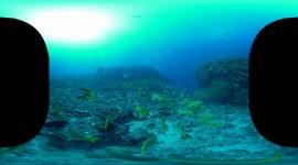 4K Divers Wallpaper For Desktop