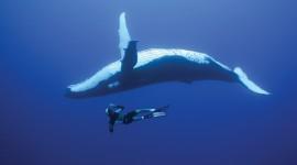 4K Divers Wallpaper Free