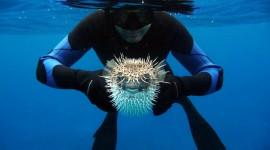 4K Divers Wallpaper Gallery