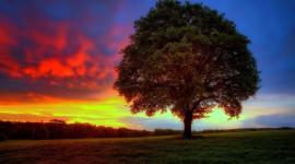 4K Lonely Tree Best Wallpaper