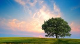 4K Lonely Tree Desktop Wallpaper