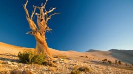 4K Lonely Tree Desktop Wallpaper HD