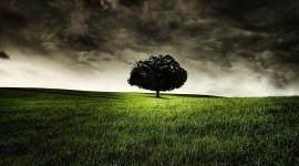 4K Lonely Tree Photo