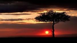 4K Lonely Tree Photo Free