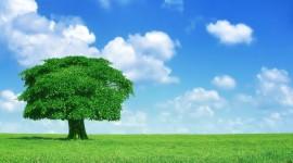 4K Lonely Tree Photo#1