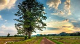 4K Lonely Tree Photo#2