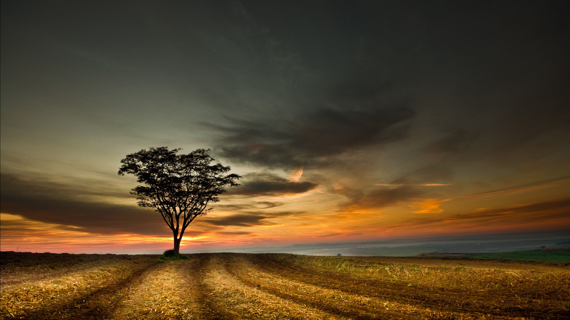 4k Wallpaper: 4K Lonely Tree Wallpapers High Quality