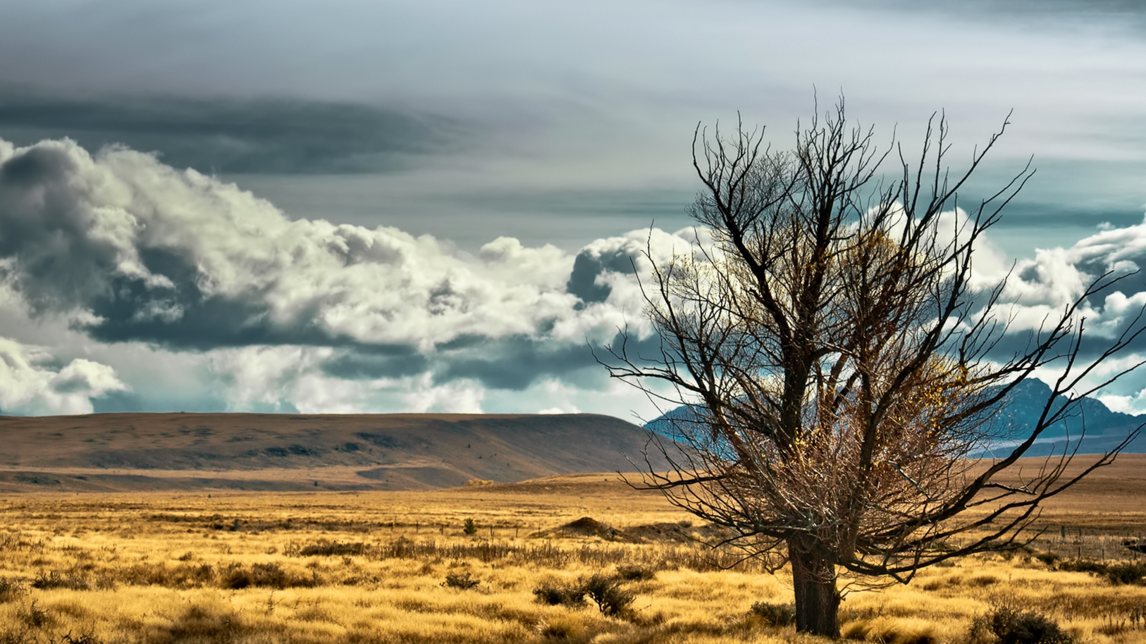 4k Background Wallpapers: 4K Lonely Tree Wallpapers High Quality