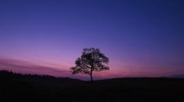 4K Lonely Tree Wallpaper Gallery