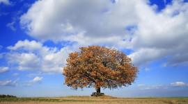 4K Lonely Tree Wallpaper#1