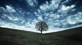 4K Lonely Tree Wallpaper#3