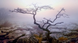 4K Lonely Tree Wallpaper#4
