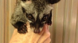 African Civet Cat Wallpaper For IPhone