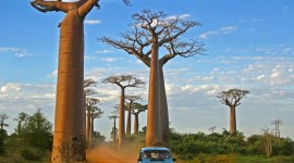 Baobabs Wallpaper For PC