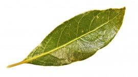 Bay Leaf Wallpaper 1080p