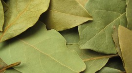 Bay Leaf Wallpaper Download Free