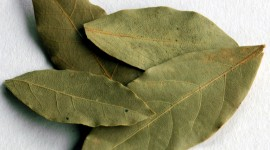 Bay Leaf Wallpaper For Desktop