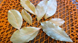 Bay Leaf Wallpaper Gallery